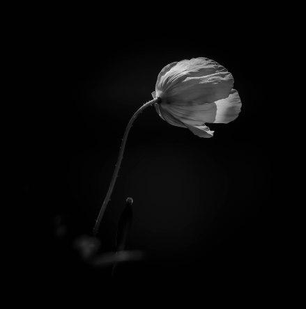 flower-in-monochrome